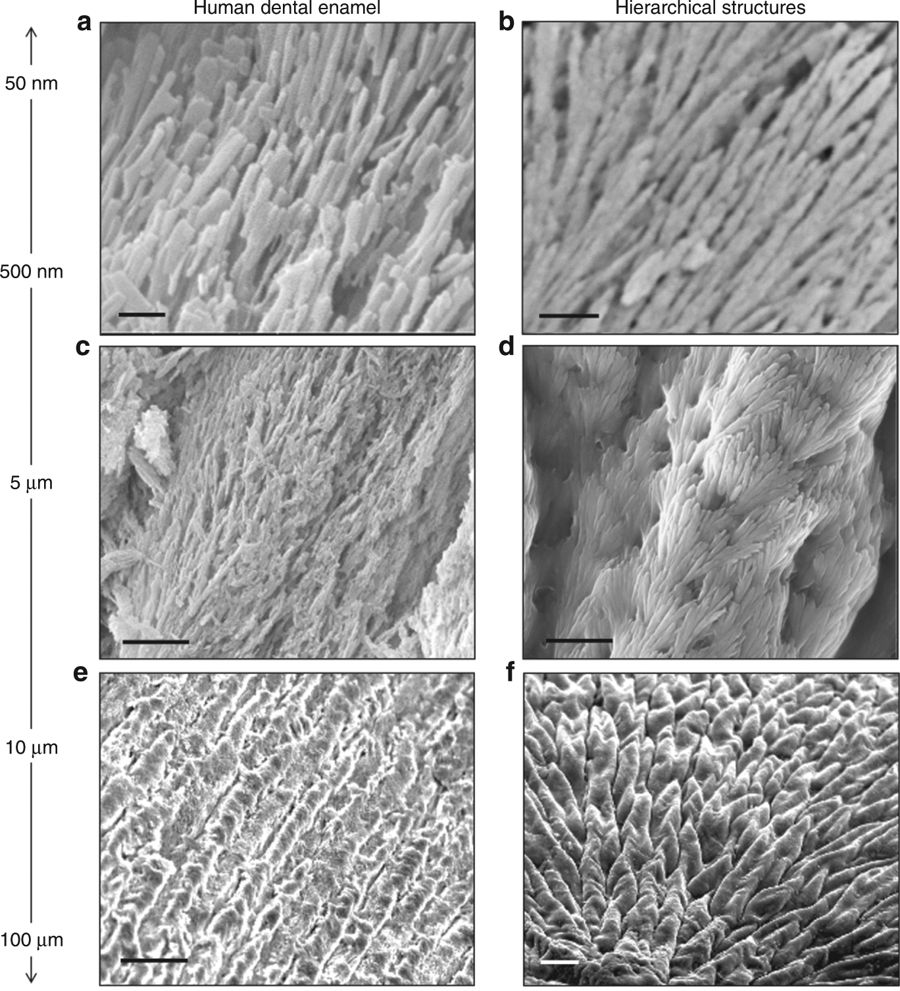 Materials Scientists Working On Dental Enamel That Could Regenerate